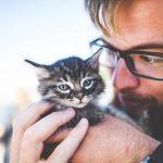 Nombres para gatos hembra - Nombres para perros hembra