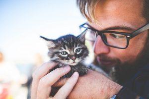 Nombres para gatos hembra – Nombres para perros hembra